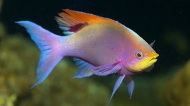 Colorful Fish Wallpaper Gallery