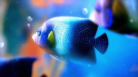 Colorful Fish Wallpaper HQ#1