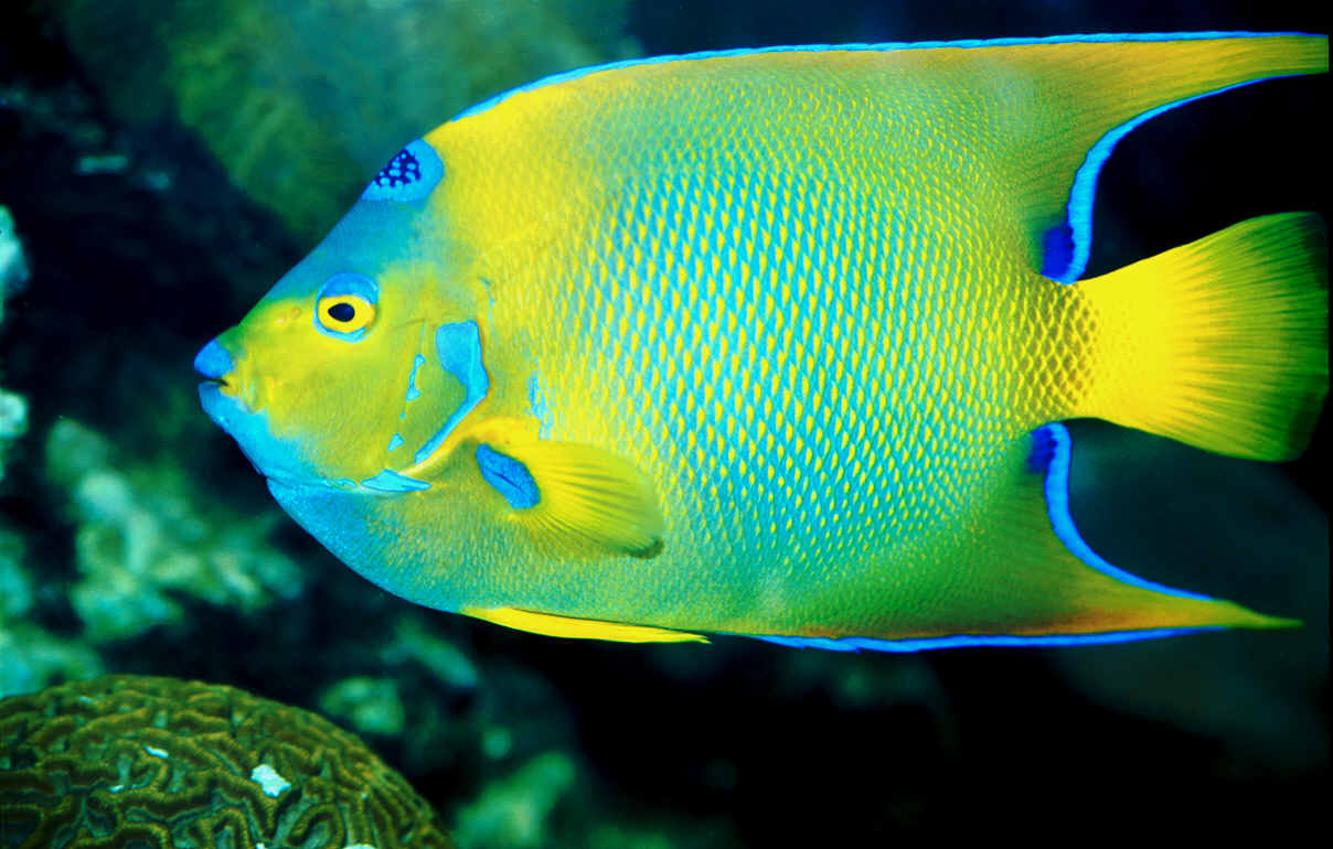 Colorful Fish Wallpapers High Quality | Download Free