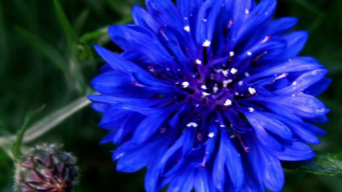 Cornflower Blue wallpapers high quality