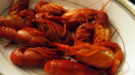 Crayfish Cooking Wallpaper Free