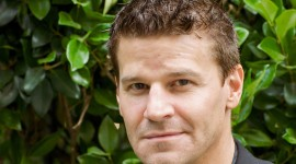 David Boreanaz Wallpaper For PC