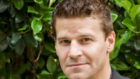 David Boreanaz wallpapers high quality