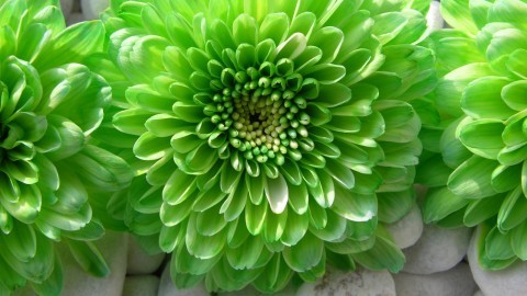 Green Flowers wallpapers high quality