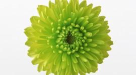 Green Flowers Desktop Wallpaper