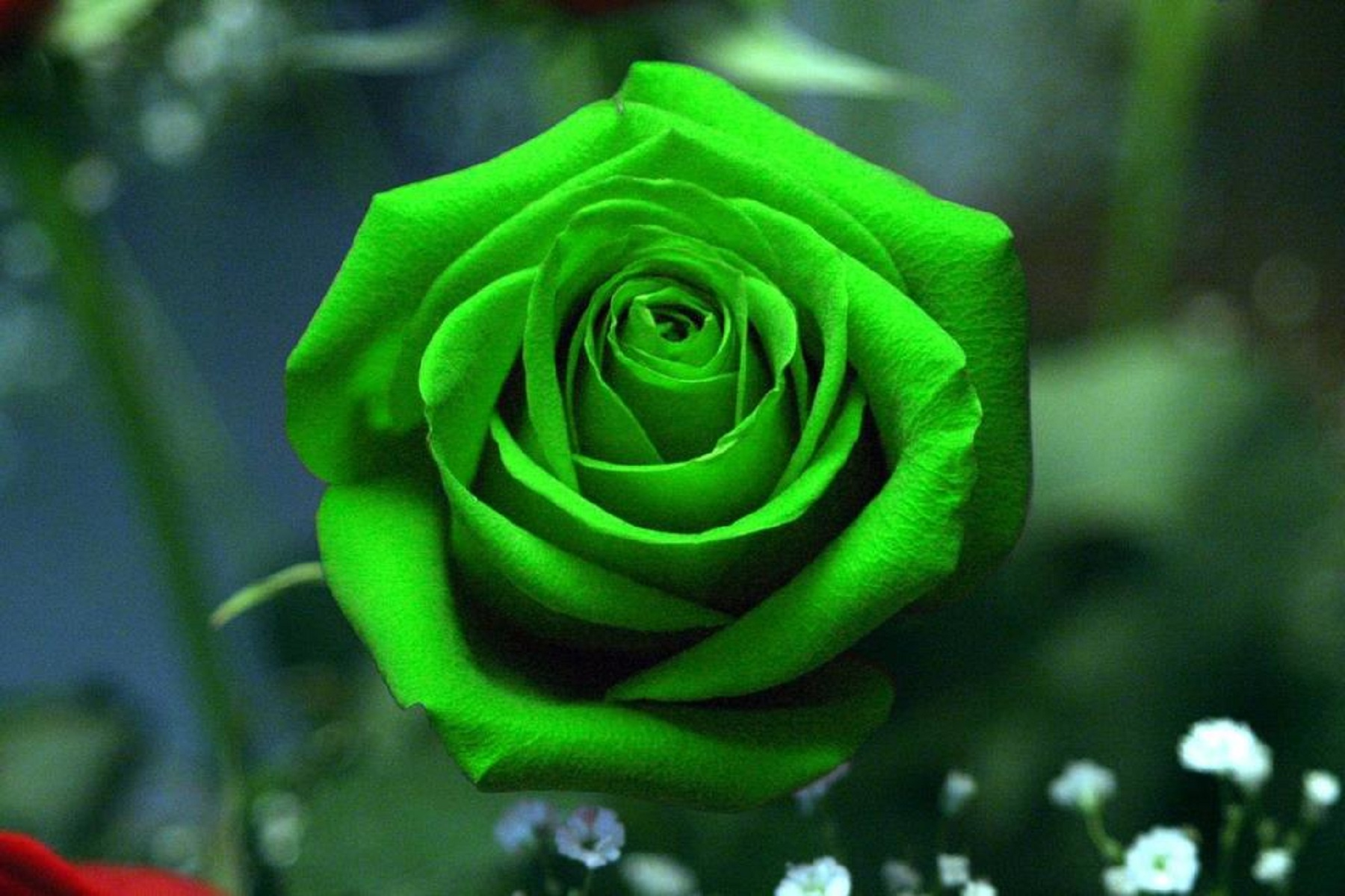green flowers wallpapers high quality  download free, Beautiful flower
