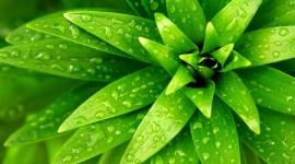 Green Flowers Wallpaper 1080p