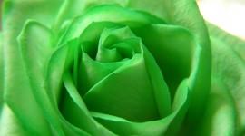 Green Flowers Wallpaper For Desktop