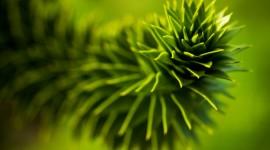 Green Flowers Wallpaper Free