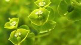 Green Flowers Wallpaper Full HD