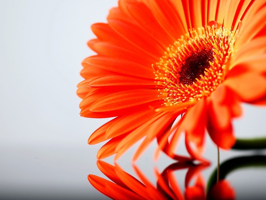 Orange Flowers wallpapers HD