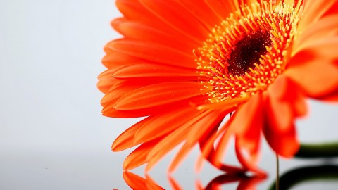 Orange Flowers wallpapers high quality