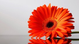 Orange Flowers Desktop Wallpaper For PC