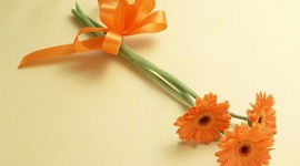 Orange Flowers Photo Download