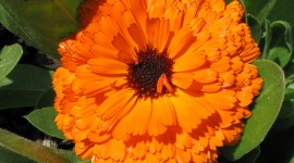 Orange Flowers Photo#1