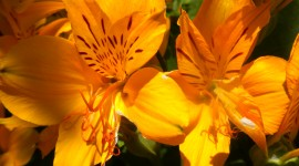 Orange Flowers Photo#2