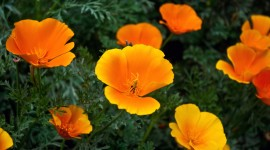 Orange Flowers Wallpaper 1080p