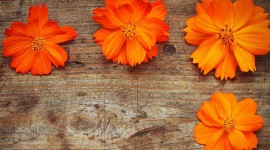 Orange Flowers Wallpaper Full HD