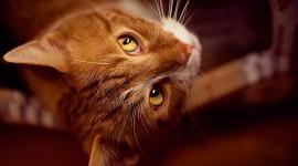 Red Cats Desktop Wallpaper