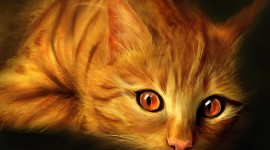 Red Cats Image