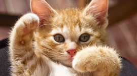 Red Cats Wallpaper Download