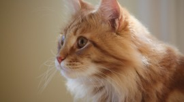 Red Cats Wallpaper For Desktop
