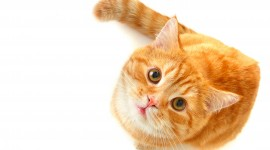 Red Cats Wallpaper Gallery