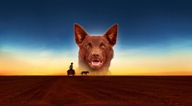 Red Dog Wallpaper