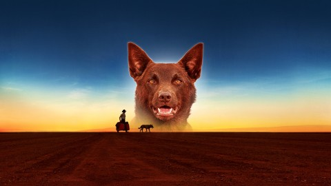 Red Dog wallpapers high quality