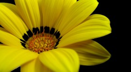 Yellow Flowers Photo Download