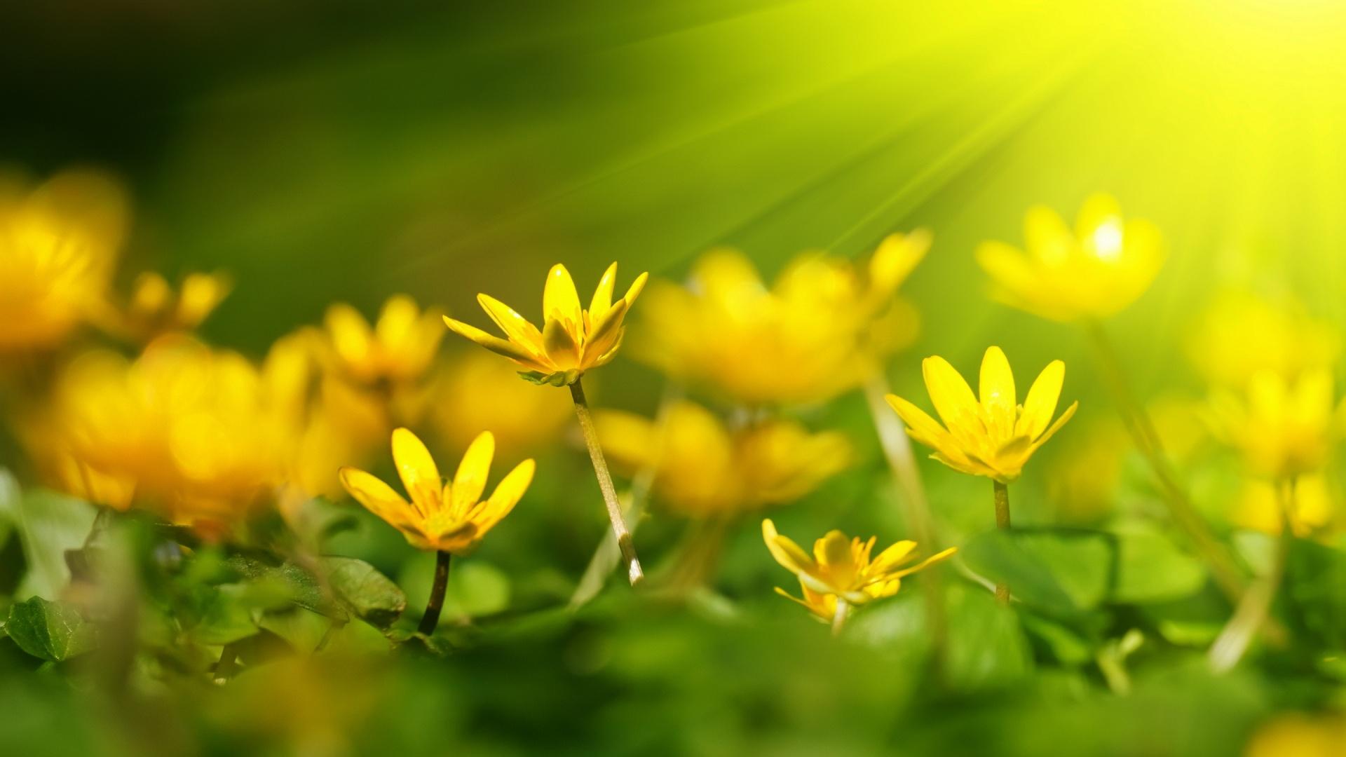 Hd wallpaper yellow flowers - Hd Wallpaper Yellow Flowers 65
