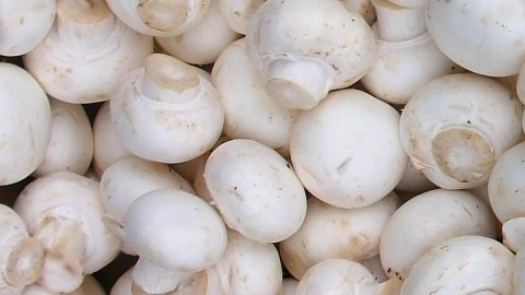 Agaricus Bisporus wallpapers high quality