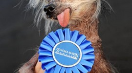 Chinese Crested Dog Wallpaper For Mobile