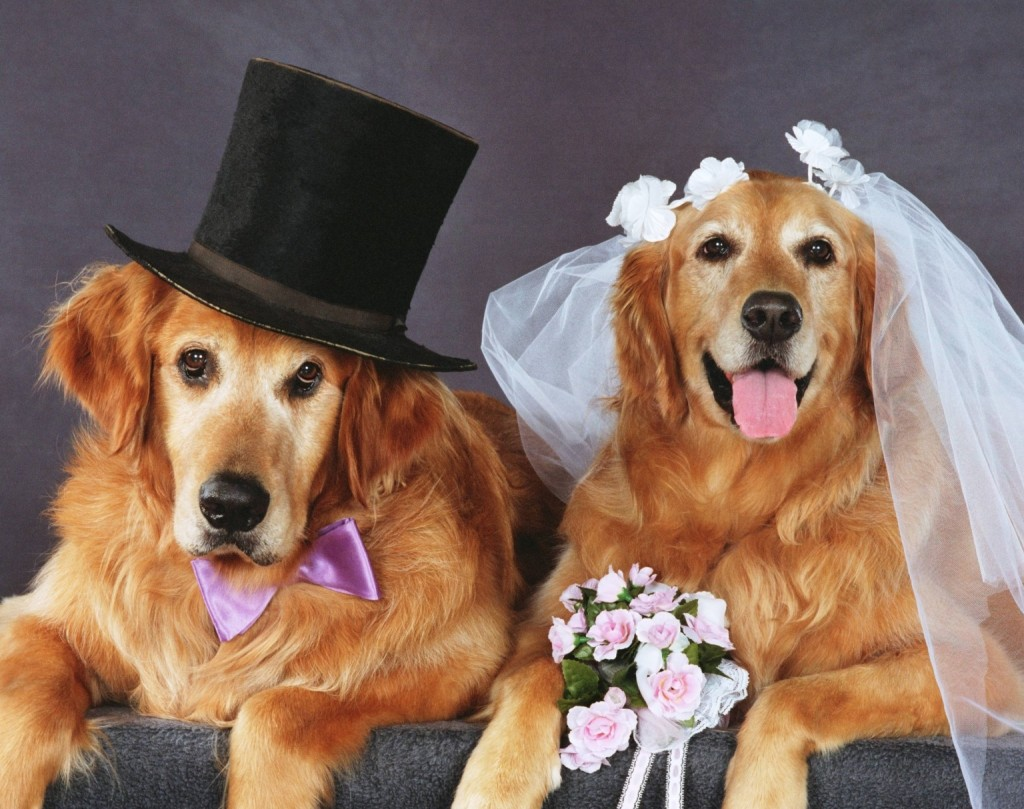 Dog Wedding wallpapers HD