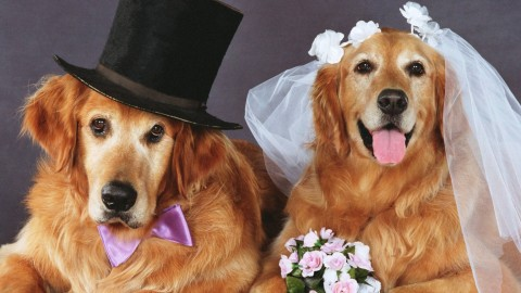 Dog Wedding wallpapers high quality