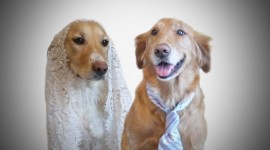 Dog Wedding Photo