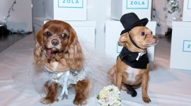 Dog Wedding Photo Free