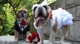Dog Wedding Wallpaper 1080p