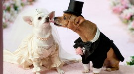 Dog Wedding Wallpaper