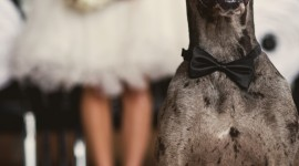 Dog Wedding Wallpaper For IPhone