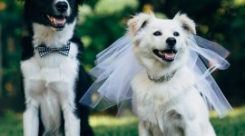 Dog Wedding Wallpaper For Mobile