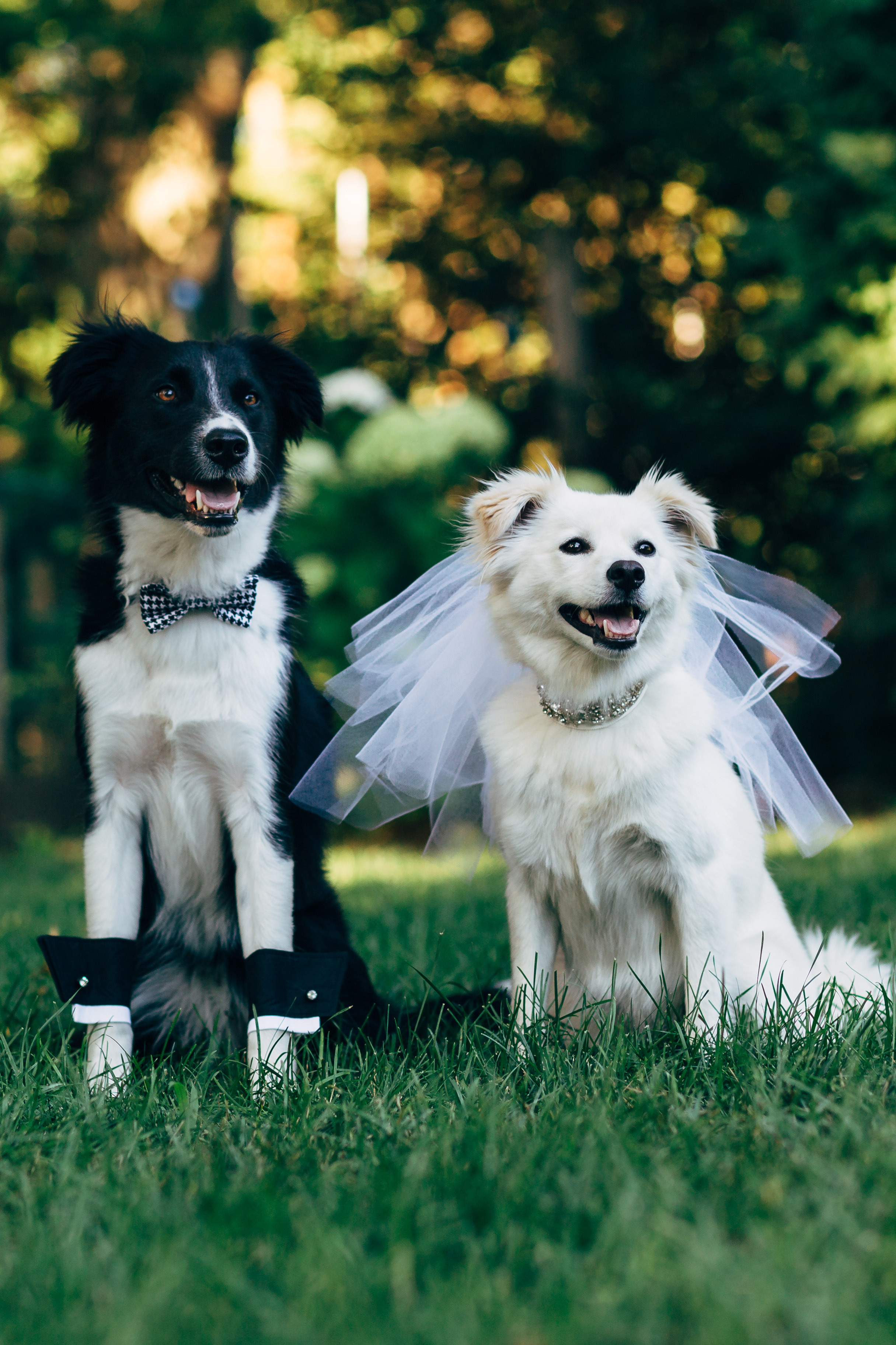 Dog Wedding Wallpapers High Quality | Download Free