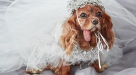 Dog Wedding Wallpaper Full HD