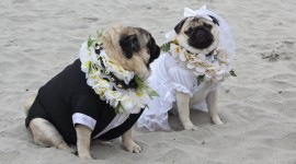 Dog Wedding Wallpaper Gallery