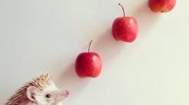 Fruit Hedgehog Best Wallpaper