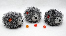 Fruit Hedgehog Desktop Wallpaper