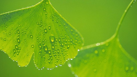 Green Leaves wallpapers high quality