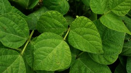 Green Leaves Photo Download
