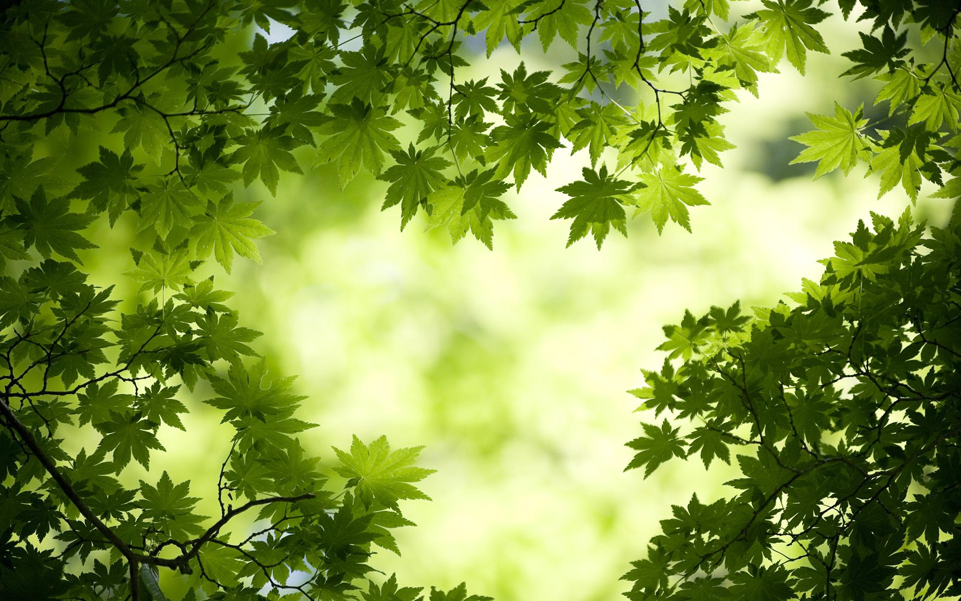 Top Wallpaper High Resolution Green - Green-Leaves-Wallpaper-For-PC  HD_738334.jpg