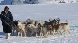 Greenland Dog Desktop Wallpaper HD